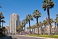Palms O Plenty (3361531260).jpg