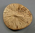 Papyrus Lids from the Embalming Cache of Tutankhamun MET VS09.184.244B.jpeg