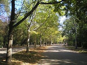 Shevchenko Park (Odessa) - Park's central alley