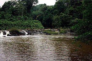 Amazônia National Park - Image: Parque nacional da amazonia 7