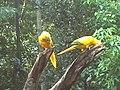 Parque das aves em foz de iguaçu, parana Brasil.jpg