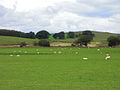Pasture, Mosshead, near Lockerbie - geograph.org.uk - 1408378.jpg
