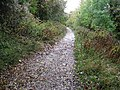 Path alongside Swanbourne Lake - geograph.org.uk - 1557353.jpg