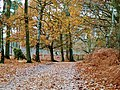 Path autumn skipwith common nature reserve woods yorkshire.jpg