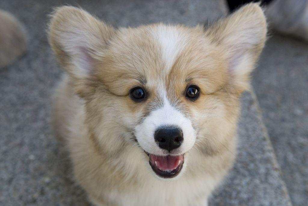 Adopt A Dog Cleveland Tn