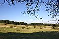 Perchtoldsdorfer Heide IV.jpg