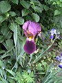 PflanzenMai06-006.JPG