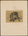 Phascolarctos cinereus - 1700-1880 - Print - Iconographia Zoologica - Special Collections University of Amsterdam - UBA01 IZ20300208.tif