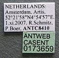 Pheidole bilimeki casent0173659 label 1.jpg