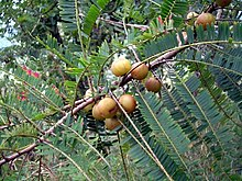 amalaka - źródło witaminy C