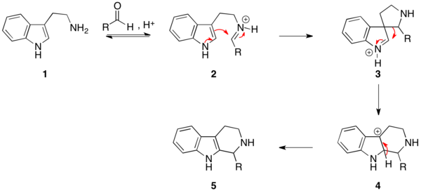 The mechanism of the Pictet-Spengler reaction