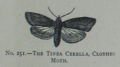 Picture Natural History - No 251 - The Tinea Cerella, Clothes Moth.png