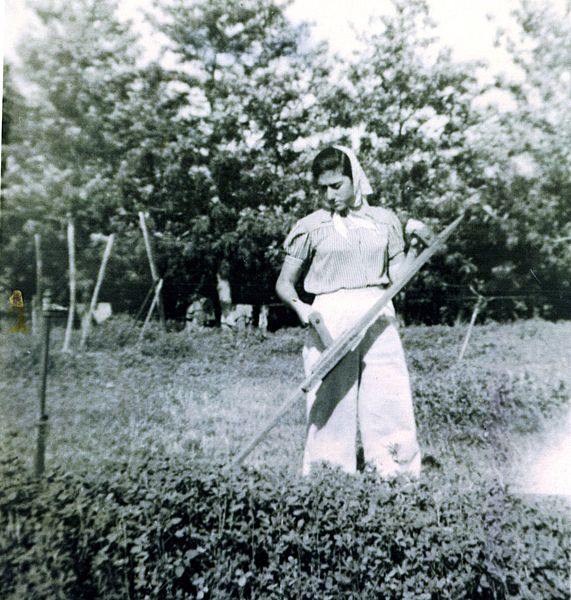 A black-and-white photograph of an Israeli woman working in a field with a scythe, harvesting an unknown crop.