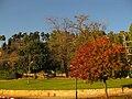 PikiWiki Israel 11432 Bare tree.JPG