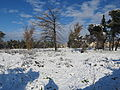 PikiWiki Israel 41371 Snow in Jerusalem.JPG