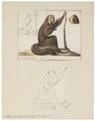 Pithecia leucocephala - 1700-1880 - Print - Iconographia Zoologica - Special Collections University of Amsterdam - UBA01 IZ20200228.tif