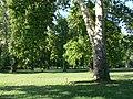 Platany Hlohovec - Plane-trees Hlohovec, Slovakia - panoramio (1).jpg