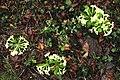 Plitvice. Flora 01.jpg