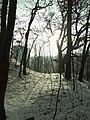 Praha, Smíchov, Skalka, zasněžený les II.JPG
