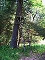 Prochody, posed v lese (01).jpg