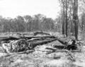 Queensland State Archives 2620 Tree clearing Beerburrum December 1916.png