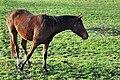 Rüti - Weid 2010-11-14 15-33-42.jpg