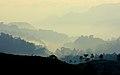 Rainforest at sunrise near Nirmala Tea Plantation at the edge of Halimun Salak National Park.jpg