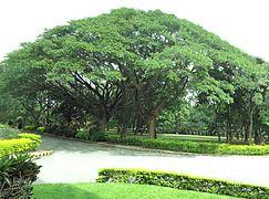 Raintree Boulevard Project