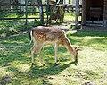 Ramnicu Valcea - zoo 9.jpg