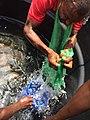 Rearing catfish.jpg