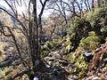 Reserva Natural Integral de Muniellos (Asturias, España) 04.JPG