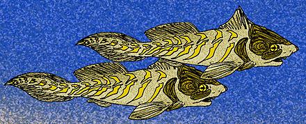 Rhamphodopsis