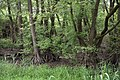 Rheinland-Pfalz, Ludwigshafen am Rhein, Landschaftsschutzgebiet 07-LSG-7314-013, Bruchlandschaft 001.jpg