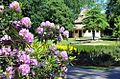 Rhododendrenhain mit Huftierhaus Zoo Rostock Kloock.jpg