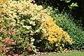 Rhododendronpark Bremen 20090513 060.JPG