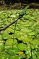 Rio Piauí - Bosque de Algarobas 12.JPG