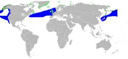 Distribución de Rissa tridactyla.