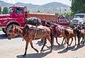 Road Transport Kashmir-style (14387650829).jpg