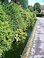 Roadside stream, Iwerne Minster - geograph.org.uk - 906930.jpg