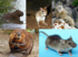 Rodent collage.png
