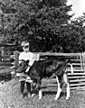 Rody Burrows standing with a calf on the Warren family farm, Bellevue, Washington, ca 1913 (WASTATE 1812).jpeg