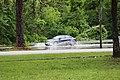 Roman Forest Flooding - 4-18-16 (26489014326).jpg