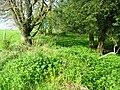 Roman agger in Linchball Wood.JPG