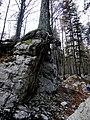 Roots (2955236016).jpg