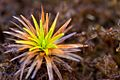 Roraima plant1.jpg