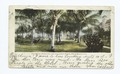 Royal Poinciana and Coconut Grove, Palm Beach, Fla (NYPL b12647398-62104).tiff