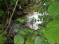Ruisseau de Loverchy @ Parc du Val Vert @ Seynod (50884783411).jpg
