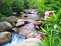 Ruisseau des singes 04.jpg