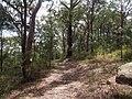 Rumbalara Reserve - panoramio (8).jpg
