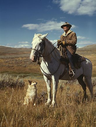 Shepherd - Shepherd with his horse and dog on Gravelly Range, Madison County, Montana, August 1942